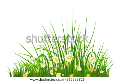 Spring green grass, herbs and flowers on white background - stock vector