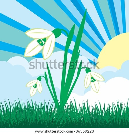Spring illustration with green grass and snowdrops - stock vector