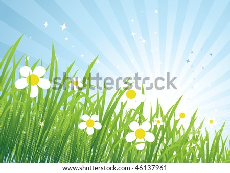 Spring meadow beautiful - stock vector