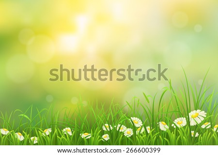 Spring nature background with green grass and chamomiles - stock vector