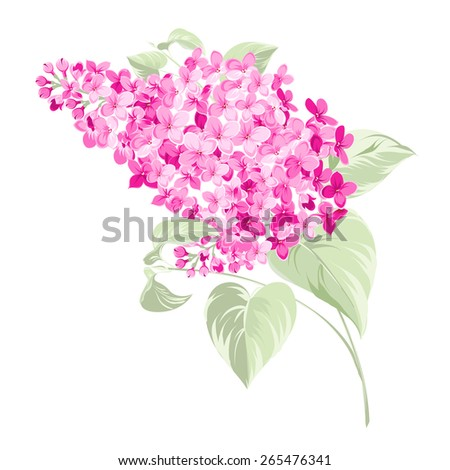 Spring syringa flowers background for the romantic design. Vector illustration - stock vector