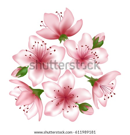 Spring tree blossom bunch vector illustration isolated on white. Flowers and buds graphic design. Pink blooming decorative elements. Japanese cherry, peach or apple tree blossom flowers vector.