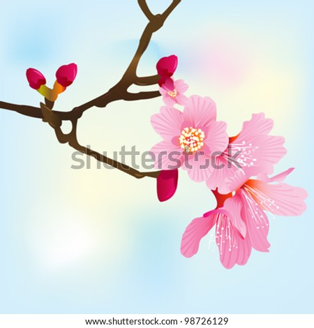 Spring tree branch with pink blossoms illustration - stock vector