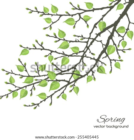 Spring twig tree on a white background. Spring holiday card with place for text. Stylish fashion background - stock vector