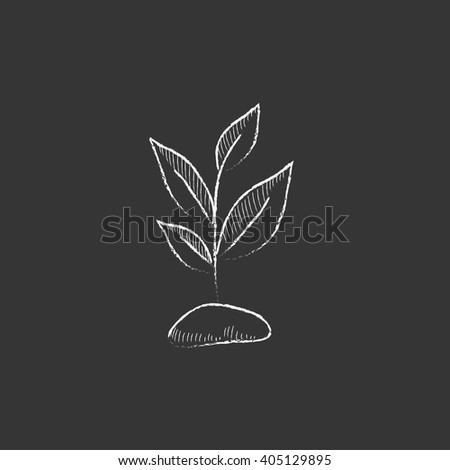 Sprout. Drawn in chalk icon. - stock vector
