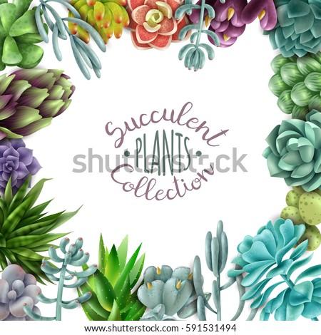 Square Frame Succulents Succulent Plants Collection Stock Photo ...