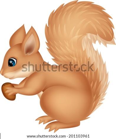 Squirrel cartoon holding nut - stock vector