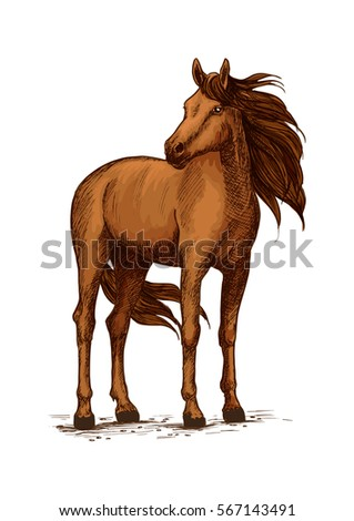 Stand of horse stallion or broodmare sketch. Mustang purebred animal with wavy mane and long tail, powerful hoof. Thoroughbred american racehorse, equestrian sport themes.