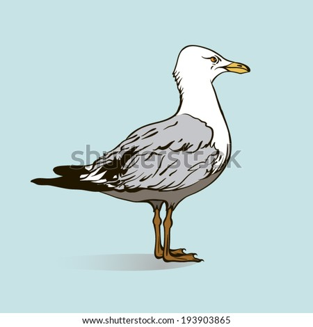 standing in profile one seagull, colored vector illustration - stock vector