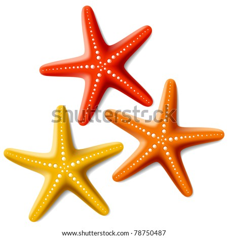 Starfishes. Vector. - stock vector