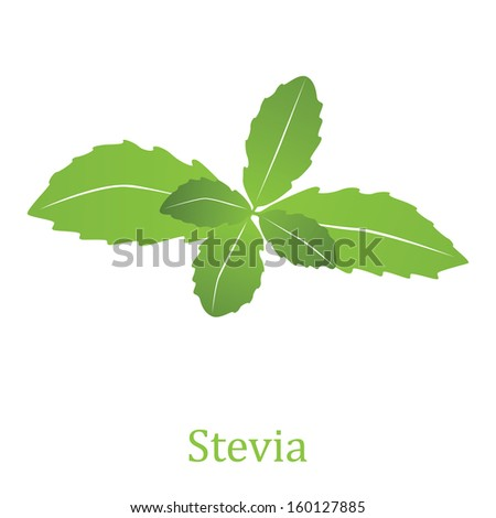 Stevia rebaudiana, sweetleaf sugar substitute isolated on white background (Vector illustration) - stock vector