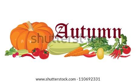 Still life with autumn abundance, ripe vegetables - stock vector