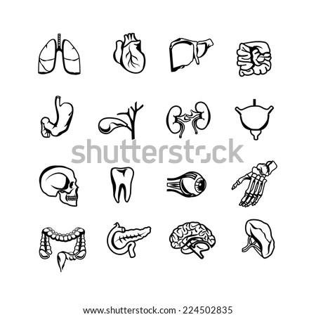 Stock vector silhouette black icon set of human internal organs - stock vector