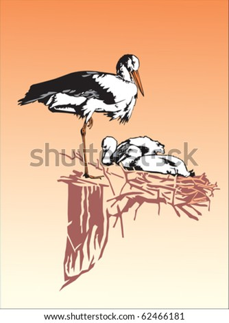 stork and young in nest