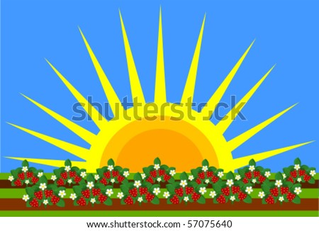 Strawberry field and big shining sun. Beautiful weather - stock vector
