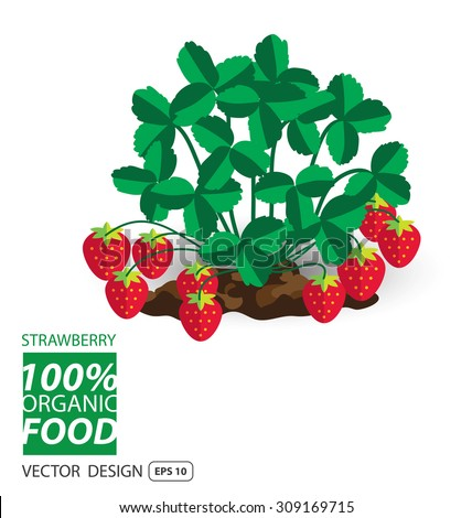 Strawberry, fruits vector illustration. - stock vector