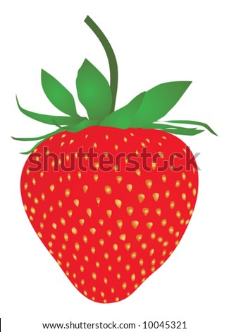 Strawberry isolated on a white background - stock vector