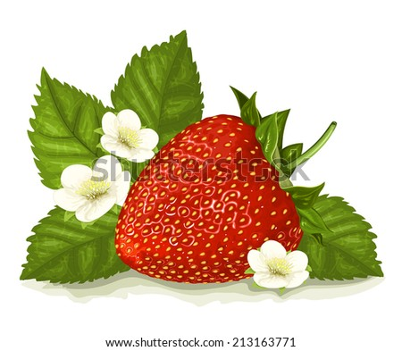 Strawberry with leaves and blossoms. Vector illustration. - stock vector