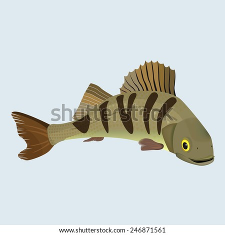 Striped bass fish vector illustration - stock vector