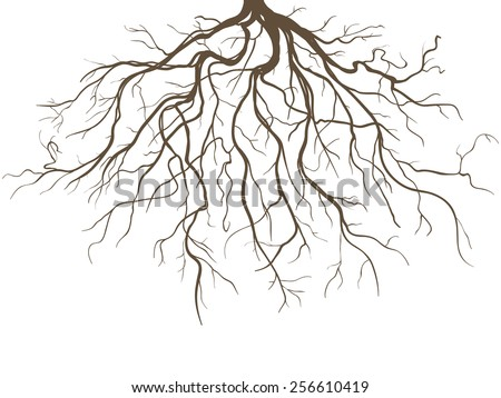 Strong Plant Roots Silhouette against White Background - stock vector