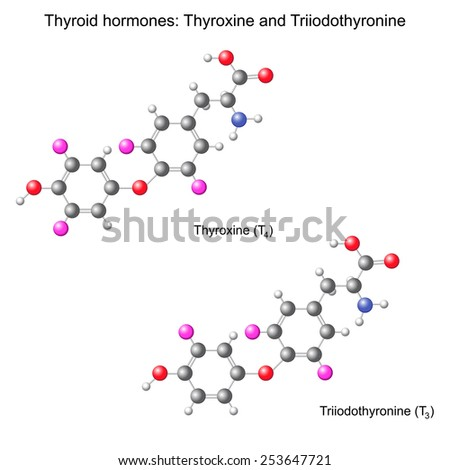 Structural chemical model of  thyroid hormones, 3d illustration, isolated, vector, eps 8 - stock vector