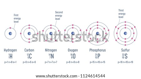 Structure atom hydrogen carbon nitrogen oxigen stock vector royalty structure of an atom hydrogen carbon nitrogen oxigen phosphorus sulfur ccuart Image collections