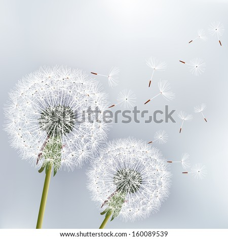 Stylish floral background with two flowers dandelions. Beautiful nature background vector. Trendy gray background. Vector illustration - stock vector