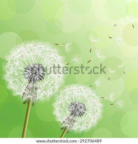 Stylish modern nature background with two flowers dandelions and flying fluff. Trendy floral green background with place for text. Abstract beautiful spring or summer wallpaper. Vector illustration - stock vector