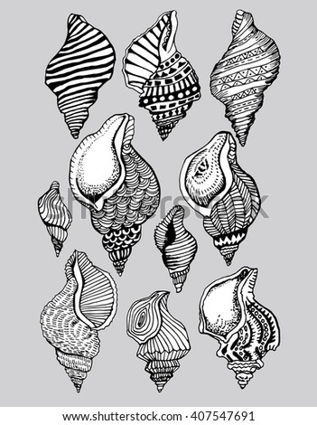 Stylized shell. Sea bottom. Shellfish. Line art. Black and white drawing by hand. Decorative. Zentangl. Set. Collection. Tattoo - stock vector