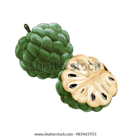 Sugar Apple Custard Annona Sweetsop Vector On White Background
