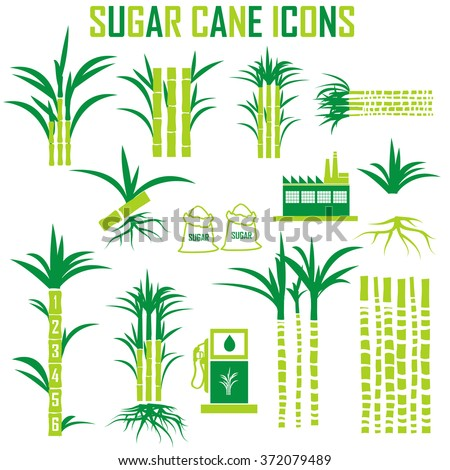 sugar cane icons vector. - stock vector