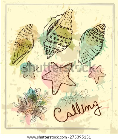 Summer Background. Hand drawn collection of various seashell illustrations