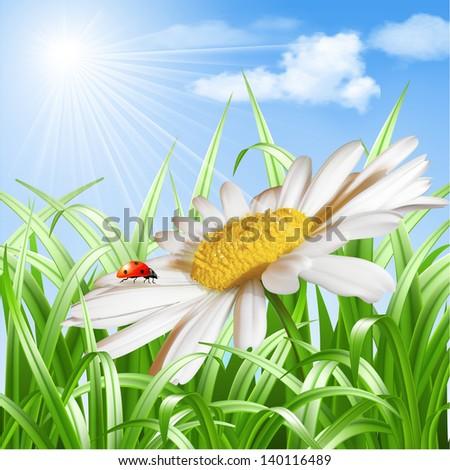 Summer background - Ladybird on daisy flower. Vector illustration - stock vector