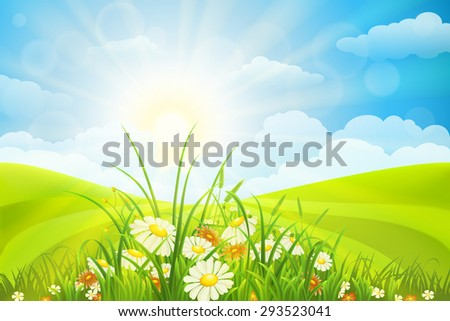 Summer background  with flowers, grass, field, sky and sun - stock vector