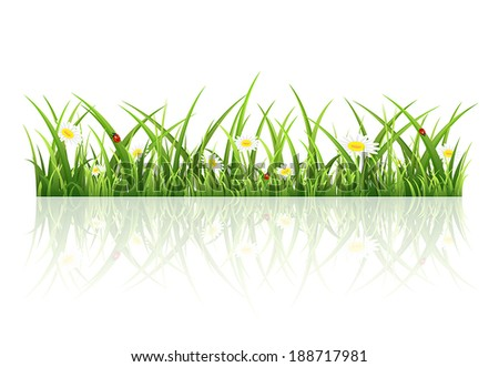 Summer background with grass, flowers and ladybugs, illustration. - stock vector
