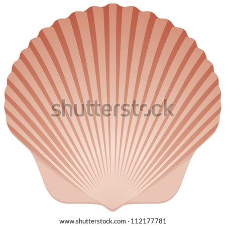 Summer Beach Scallop Sea Shell vector illustration on White Background - stock vector