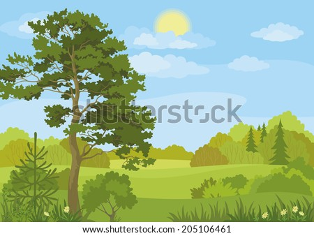 Summer landscape with pine and fir trees, bushes, flowers, grass, sun and blue sky. Vector - stock vector