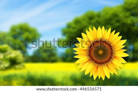 Summer landscape with sunflower, vector illustration. - stock vector