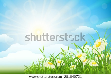 Summer meadow landscape with green grass, flowers, sky and sun - stock vector
