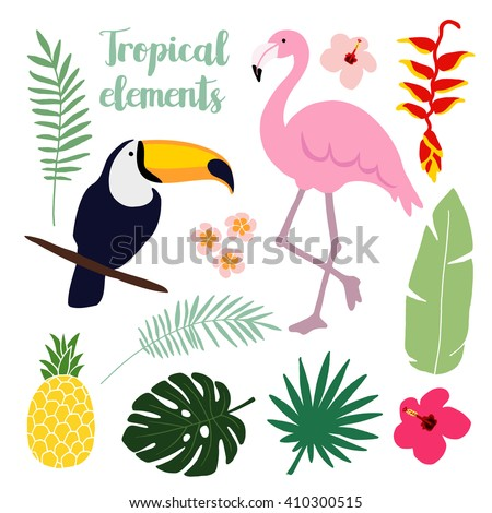 Summer tropical graphic elements. Toucan and flamingo bird. Jungle floral illustrations, palm leaves, hibiscus, flowers, pineapple. Isolated illustrations, flat design. stock vector. Jungle animals.