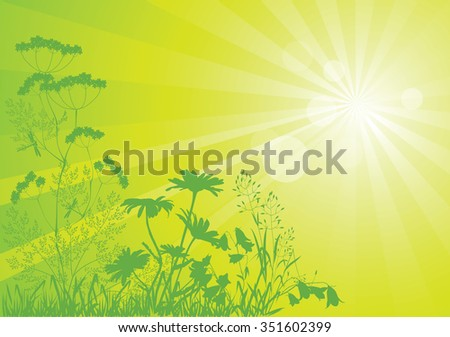 Sunbeams and silhouettes of wild flowers and herbs