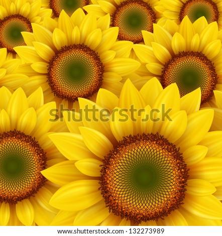 Sunflower field as summer background, vector illustration. - stock vector