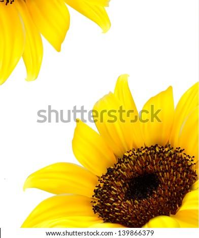 Sunflower vector background/ - stock vector