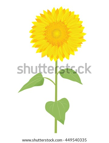 sunflower vector design