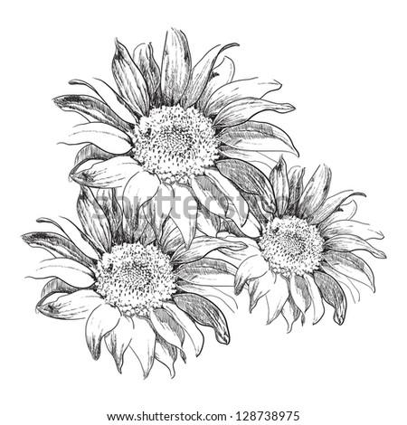 Sunflowers - stock vector