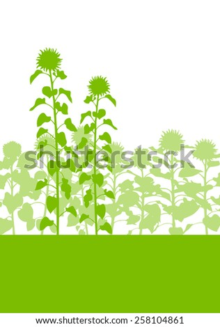 Sunflowers field vector background ecology green concept - stock vector