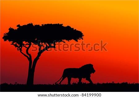 Sunrise in Africa, walking lion silhouette - stock vector