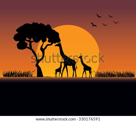 Sunset at Safari & Giraffes Family - stock vector