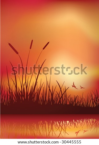 sunset in marshland. Vector illustration. Elements are layered separately in vector file. CMYK color mode.