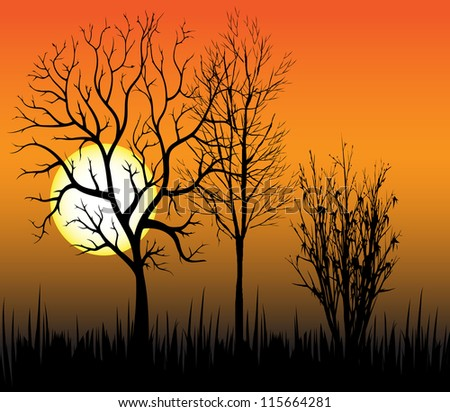 Sunset on the background of trees.Vector